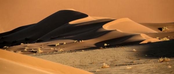 Die Namib ist die älteste Wüste der Welt und einer der unwirtlichsten Orte auf dem Globus. Ein Stückchen Erde, das es zu entdecken gilt. Foto: 2630/shutterstock, Inc.